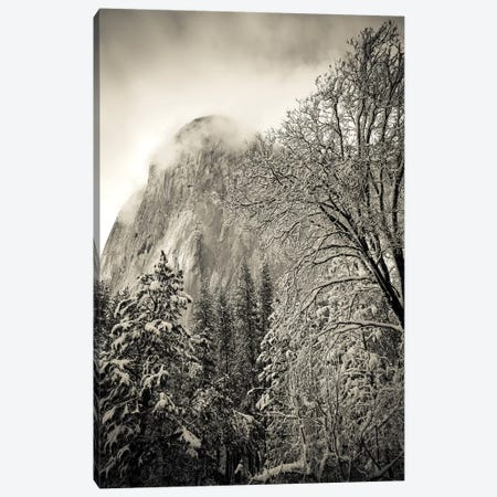 El Capitan and black oak in winter, Yosemite National Park, California, USA Canvas Print #RBS10} by Russ Bishop Canvas Artwork
