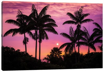 Sunset through silhouetted palm trees, Kona Coast, The Big Island, Hawaii, USA Canvas Art Print