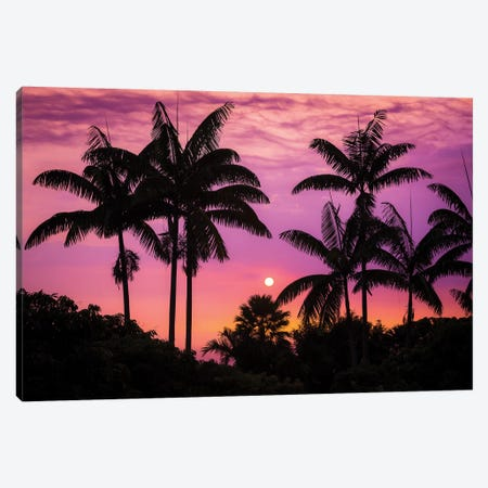 Sunset through silhouetted palm trees, Kona Coast, The Big Island, Hawaii, USA Canvas Print #RBS124} by Russ Bishop Canvas Artwork