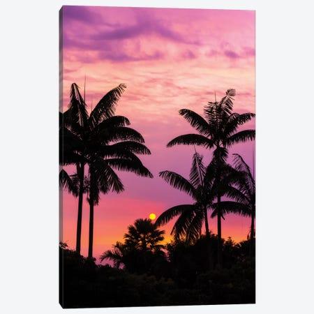 Sunset through silhouetted palm trees, Kona Coast, The Big Island, Hawaii, USA Canvas Print #RBS125} by Russ Bishop Canvas Wall Art