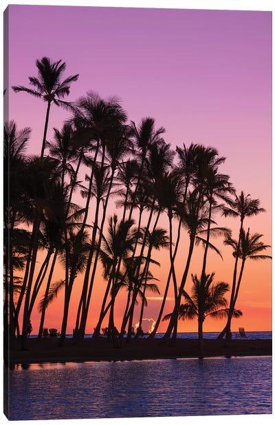 Sunset through silhouetted palms at Anaeho'omalu Bay, Kohala Coast, Big Island, Hawaii, USA Canvas Art Print