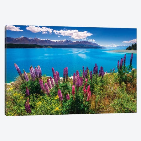 Wildflowers at Lake Pukaki in the Southern Alps, Canterbury, South Island, New Zealand Canvas Print #RBS138} by Russ Bishop Canvas Wall Art