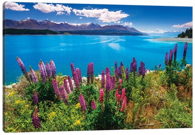 Wildflowers at Lake Pukaki in the Southern Alps, Canterbury, South Island, New Zealand Canvas Art Print