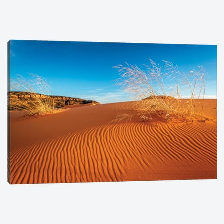 Sand dunes and grass, Coral Pink Sand Dunes State Park, Kane County, Utah, USA. Canvas Print #RBS156} by Russ Bishop Canvas Art Print