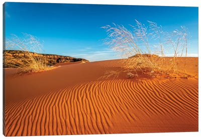 Sand dunes and grass, Coral Pink Sand Dunes State Park, Kane County, Utah, USA. Canvas Art Print