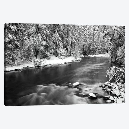 Snow dusted pines along the Merced River, Yosemite National Park, California, USA Canvas Print #RBS31} by Russ Bishop Canvas Art