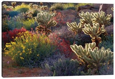 Brittlebush, Jumping Cholla, and Chuparosa in bloom, Anza-Borrego Desert State Park, CA Canvas Art Print