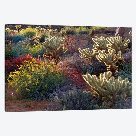 Brittlebush, Jumping Cholla, and Chuparosa in bloom, Anza-Borrego Desert State Park, CA Canvas Print #RBS62} by Russ Bishop Art Print