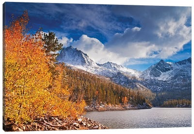 Fall aspens under Sierra peaks from South Lake, John Muir Wilderness, Sierra Nevada Mountains, CA Canvas Art Print