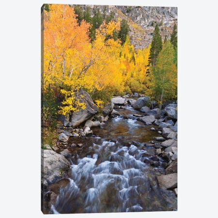 Fall color along Bishop Creek, Inyo National Forest, Sierra Nevada Mountains, California, USA. Canvas Print #RBS85} by Russ Bishop Canvas Artwork
