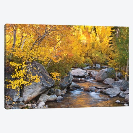 Fall color along Bishop Creek, Inyo National Forest, Sierra Nevada Mountains, California, USA. Canvas Print #RBS86} by Russ Bishop Canvas Artwork