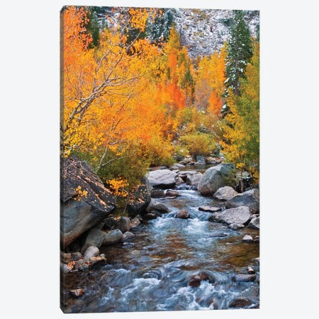 Fall color along Bishop Creek, Inyo National Forest, Sierra Nevada Mountains, California, USA. Canvas Print #RBS88} by Russ Bishop Canvas Print