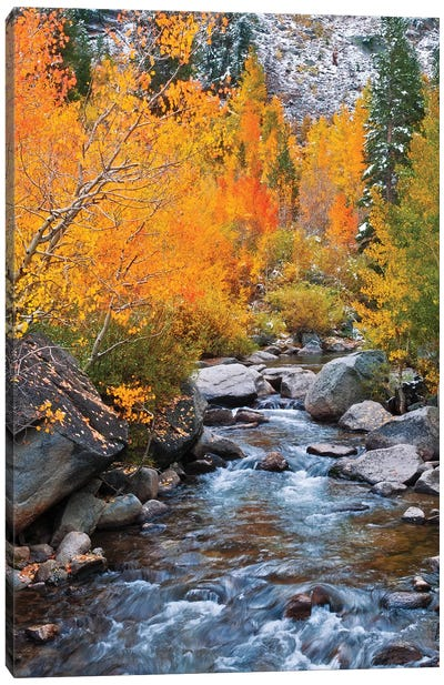 Fall color along Bishop Creek, Inyo National Forest, Sierra Nevada Mountains, California, USA. Canvas Art Print