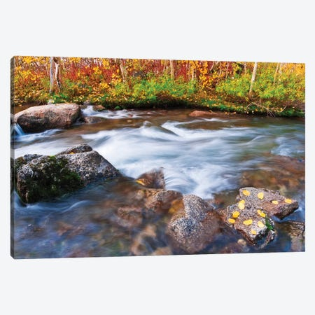 Fall color along Bishop Creek, Inyo National Forest, Sierra Nevada Mountains, California, USA. Canvas Print #RBS89} by Russ Bishop Canvas Print