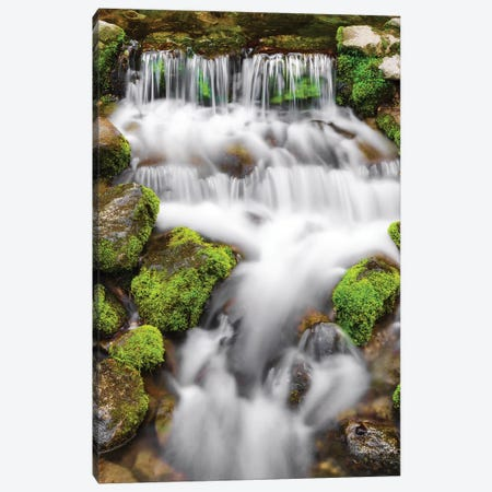 Fern Spring, Yosemite National Park, California, USA. Canvas Print #RBS91} by Russ Bishop Canvas Wall Art