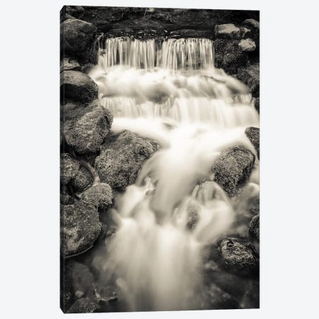 Fern Spring, Yosemite National Park, California, USA. Canvas Print #RBS92} by Russ Bishop Canvas Wall Art
