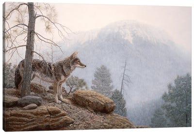 Misty Lookout Canvas Art Print