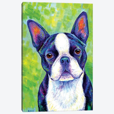 Effervescent - Boston Terrier Canvas Print #RBW10} by Rebecca Wang Canvas Artwork
