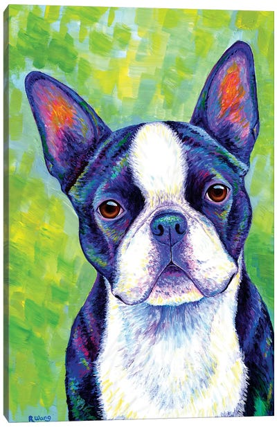 Effervescent - Boston Terrier Canvas Art Print