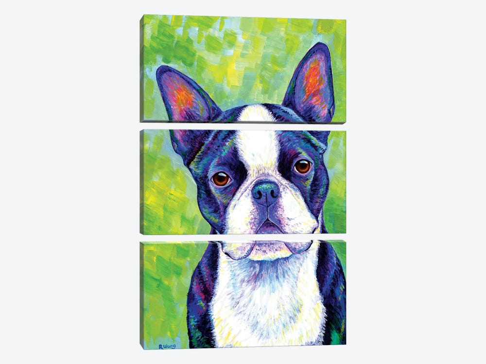 Effervescent - Boston Terrier by Rebecca Wang 3-piece Canvas Wall Art
