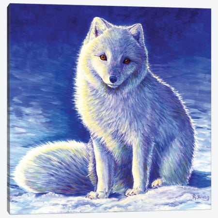 Peaceful Winter - Arctic Fox Canvas Print #RBW22} by Rebecca Wang Canvas Art Print