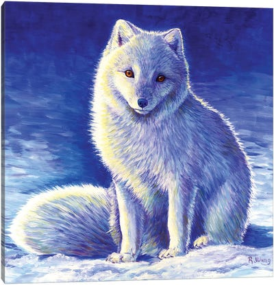 Peaceful Winter - Arctic Fox by Rebecca Wang Canvas Art Print