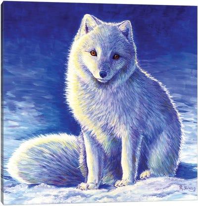 Peaceful Winter - Arctic Fox Canvas Art Print