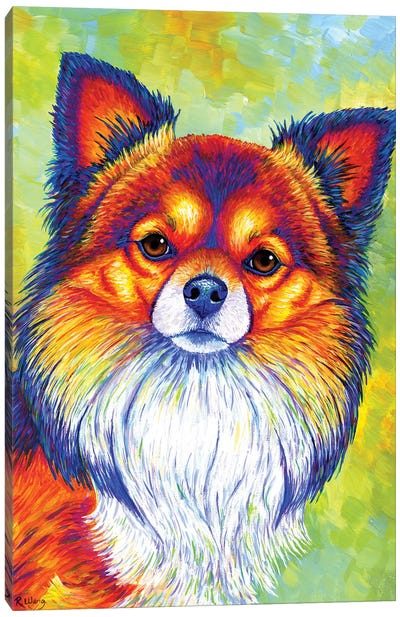 Small and Sassy - Chihuahua by Rebecca Wang Canvas Art Print