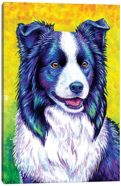 Watchful Eye - Border Collie by Rebecca Wang Canvas Art Print