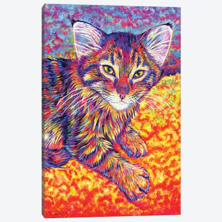 Colorful Brown Tabby Kitten Canvas Print #RBW53} by Rebecca Wang Canvas Art