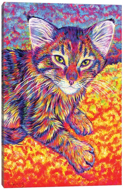 Colorful Brown Tabby Kitten Canvas Art Print