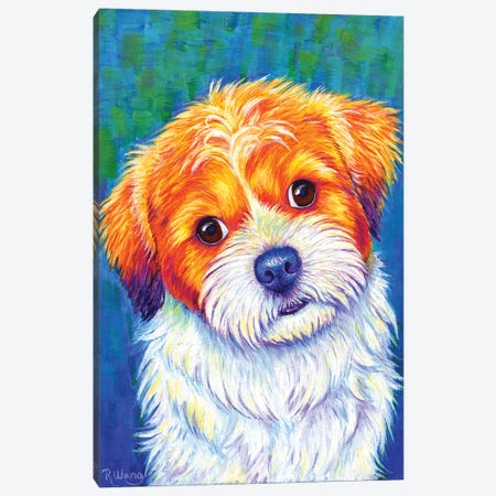 Curious Shih Tzu Canvas Print #RBW56} by Rebecca Wang Art Print