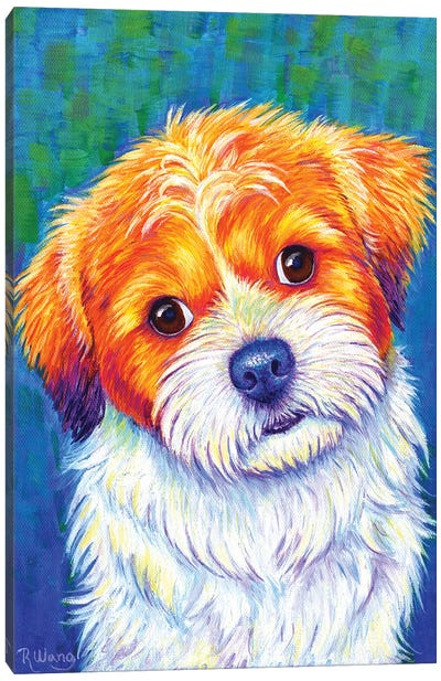 Curious Shih Tzu Canvas Art Print