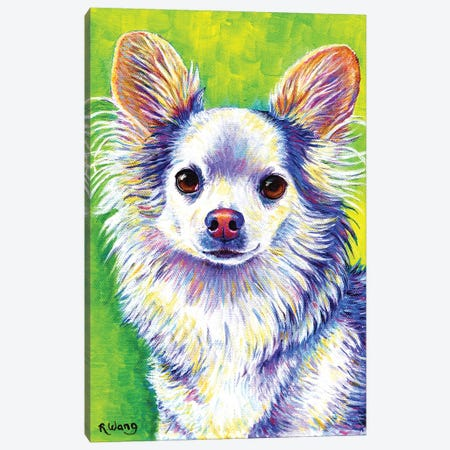 Cute Chihuahua 3-Piece Canvas #RBW57} by Rebecca Wang Art Print