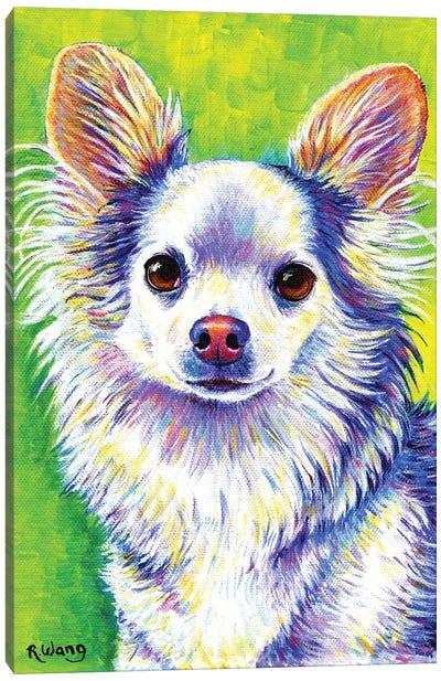 Cute Chihuahua Canvas Art Print