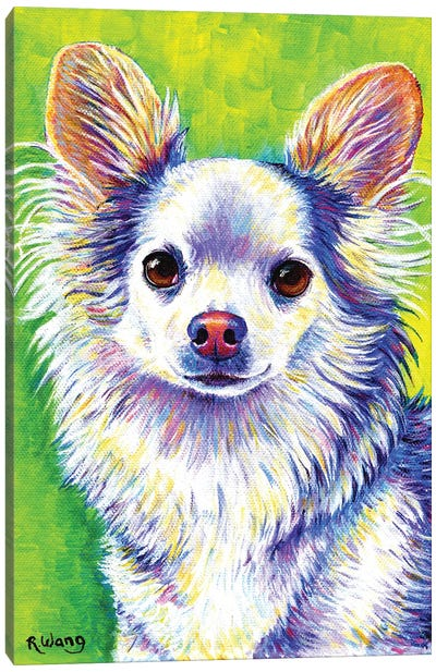 Cute Chihuahua Canvas Art Print