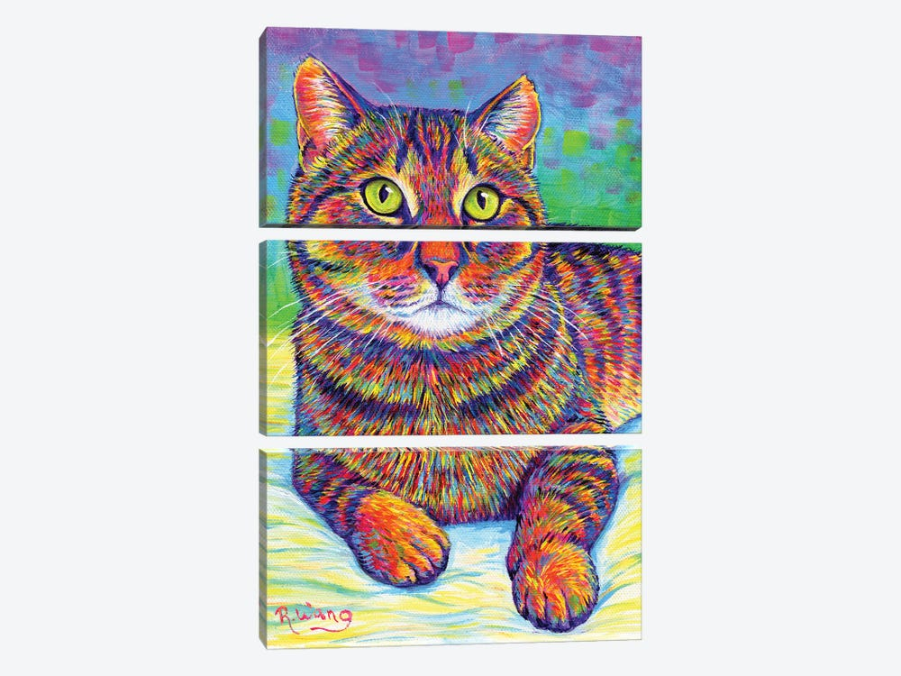 Rainbow Brown Tabby by Rebecca Wang 3-piece Canvas Print