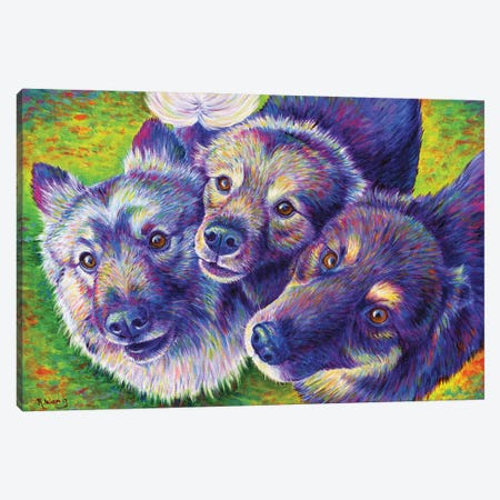 Three Amigos Canvas Print #RBW70} by Rebecca Wang Canvas Wall Art
