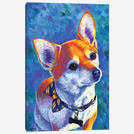 Curious Chihuahua Dog Canvas Print #RBW75} by Rebecca Wang Canvas Art Print