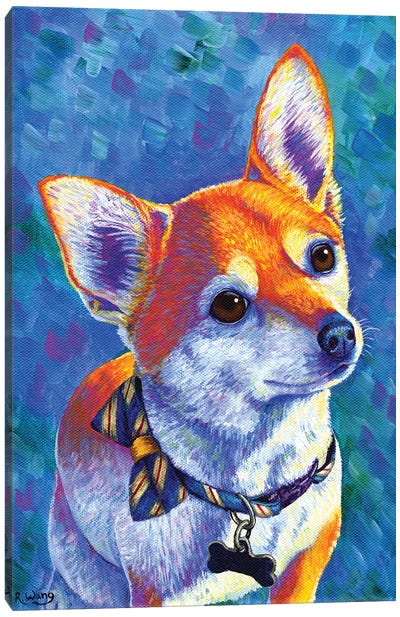 Curious Chihuahua Dog Canvas Art Print