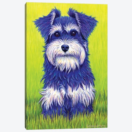 Curiosity - Miniature Schnauzer Canvas Print #RBW7} by Rebecca Wang Canvas Artwork