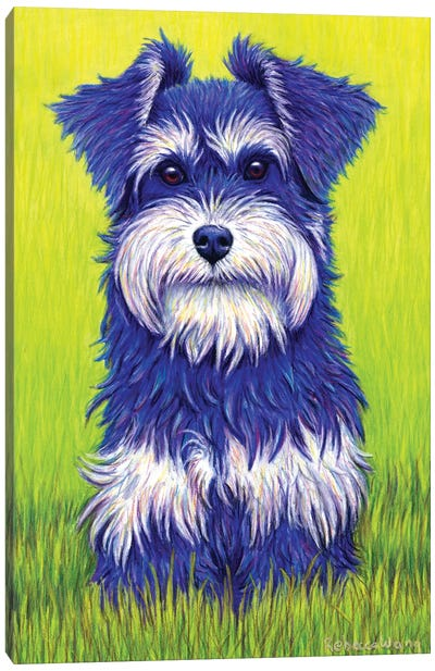 Curiosity - Miniature Schnauzer Canvas Art Print