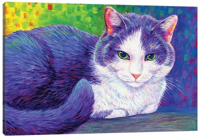 Vibrant Tuxedo Cat Canvas Art Print