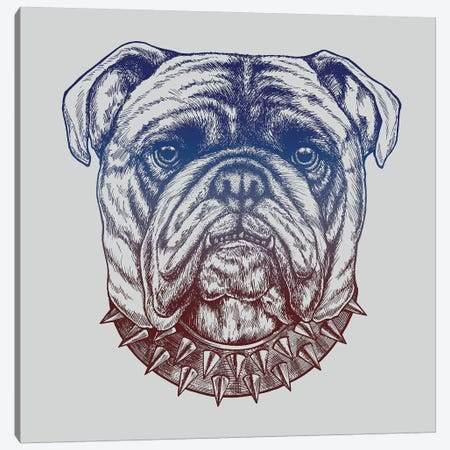 Gritty Bulldog Canvas Print #RCA2} by Rachel Caldwell Canvas Print