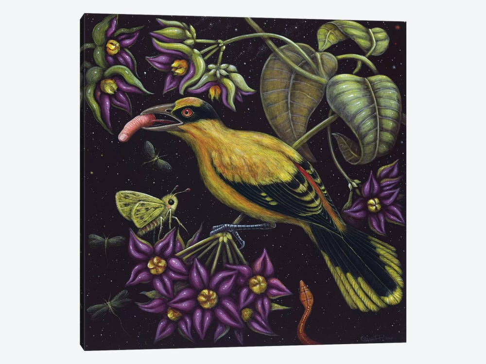 Birdfinger by R.S. Connett 1-piece Canvas Wall Art