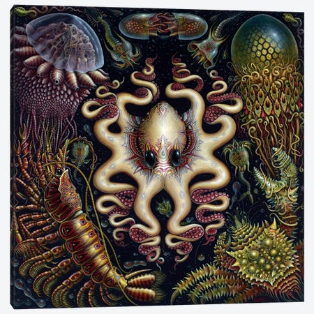 Sea Fauna Canvas Print #RCN29} by R.S. Connett Canvas Art Print