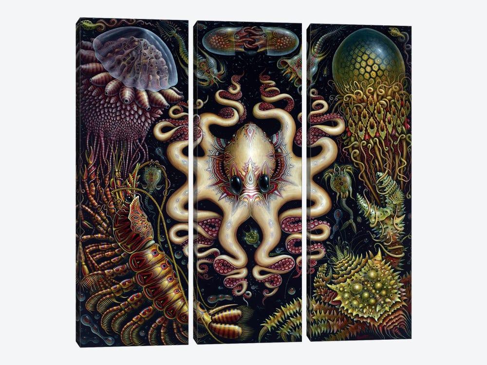 Sea Fauna by R.S. Connett 3-piece Canvas Art Print