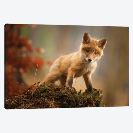 Fox Canvas Print #RDA4} by Robert Adamec Canvas Art Print