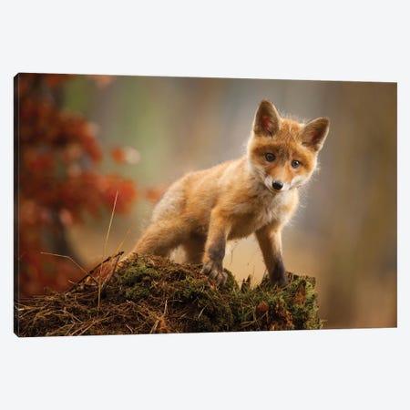 Fox Canvas Print #RDA4} by Robert Adamec Canvas Art Print