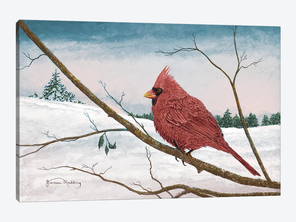 Auburn Cardinal Canvas Print by James Redding | iCanvas